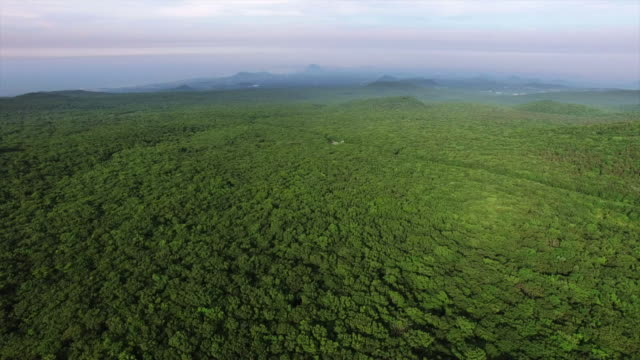 aerial view of landscape of forest in distance - papua stock videos and b-roll footage