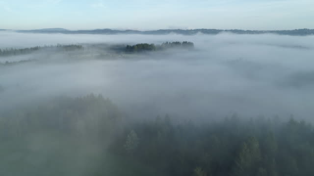 aerial view of landscape with trees and fog in the morning. murnauer, murnauer moos, garmisch-partenkirchen district, upper bavaria, bavaria, germany, europe. - garmisch partenkirchen stock videos and b-roll footage