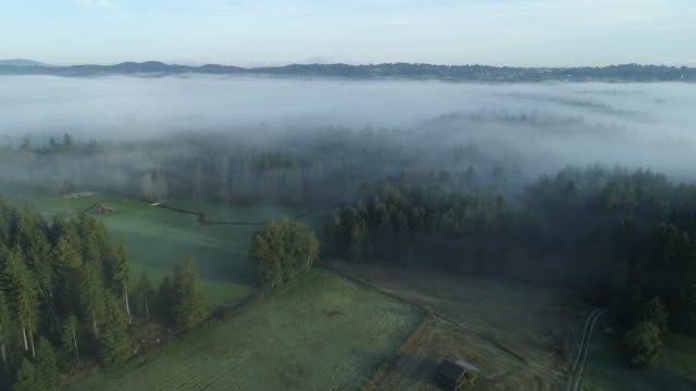 aerial view of landscape with trees and fog in the morning. murnauer, murnauer moos, garmisch-partenkirchen district, upper bavaria, bavaria, germany, europe. - bog stock videos & royalty-free footage