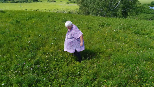 aerial view of landscape, women gather wild berries for preparations for the winter. siberia, russia. - tunic stock videos & royalty-free footage