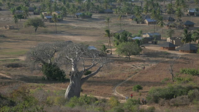 Aerial view of large baobab tree with edge of village