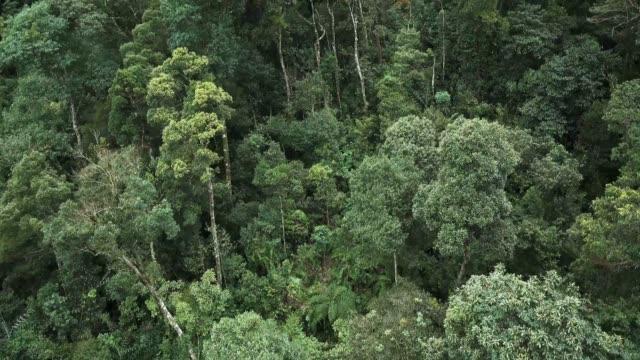 vídeos de stock, filmes e b-roll de vista aérea da grande área da floresta tropical - floresta pluvial