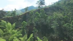 Aerial view of latin american men managing a coffee crop