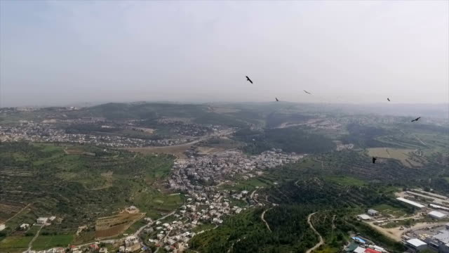 aerial view of lesser spotted eagles (clanga pomarina) migrating north above the jerusalem mountains - große tiergruppe stock-videos und b-roll-filmmaterial