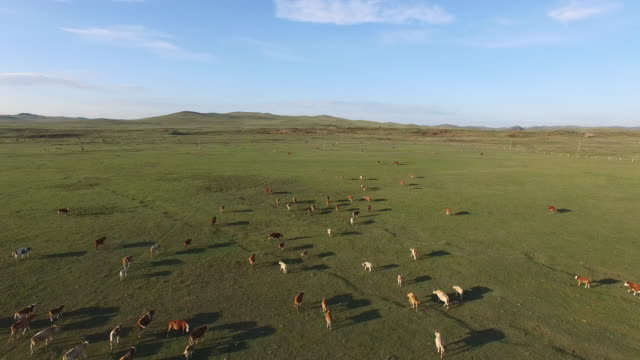 Aerial View of Livestock In China