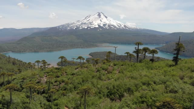 aerial view of llaima volcano and conguillio lake in conguillio national park - south stock videos & royalty-free footage