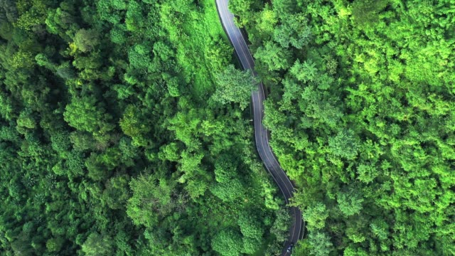 aerial view of local road in the forest, travel and transportation concept - winding road stock videos & royalty-free footage
