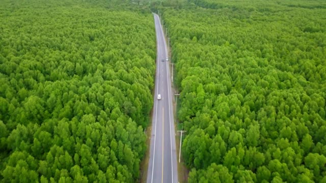 aerial view of local road trip with evergreen tree in thailand - single track stock videos and b-roll footage