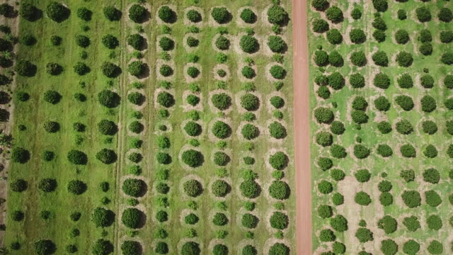 aerial view of longan plantation agriculture background - dessert stock videos & royalty-free footage
