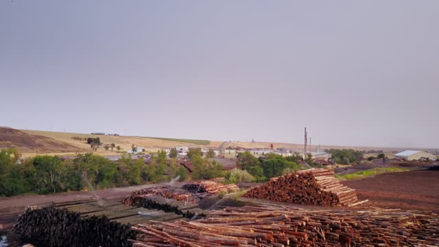 aerial view of lumber yard - timber stock videos and b-roll footage