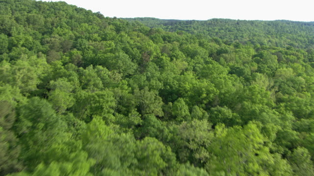 aerial view of lush forest in alabama in united states of america - aerial stock videos & royalty-free footage