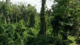 Aerial view of lush jungle forest close flight