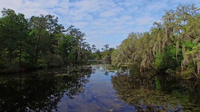 vídeos y material grabado en eventos de stock de drone. aerial view of majestic wetland river near magical airlie gardens - wilmington carolina del norte