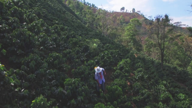 aerial view of male farmer fumigating the coffee crop - lavoratore agricolo video stock e b–roll