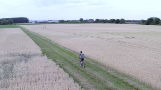 aerial view of man pedaling bicycle in wheat field - meerbarbe stock-videos und b-roll-filmmaterial