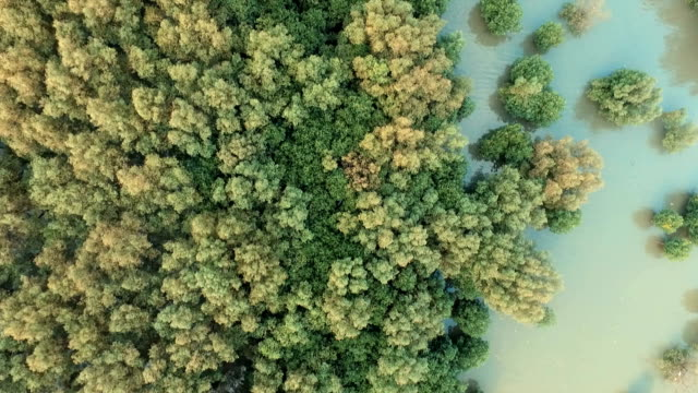 Aerial View of mangrove forest and limestone cliff