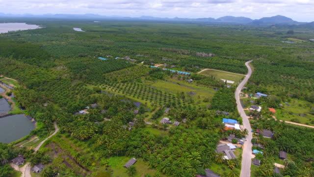 stockvideo's en b-roll-footage met luchtfoto van mangrovebossen en zee bij trang provincie, thailand, - trang province