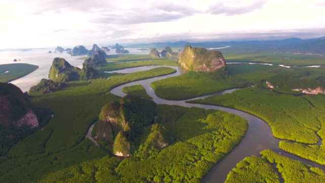 aerial view of mangrove forest in thailand, phang-nga province, flying over mangrove forest with beautiful sunlight in the morning - antenna aerial stock videos & royalty-free footage