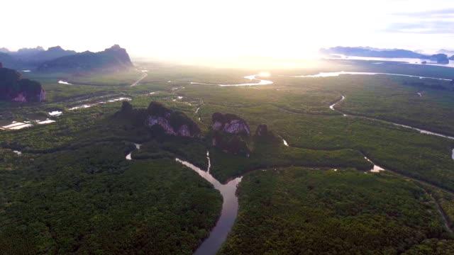 stockvideo's en b-roll-footage met luchtfoto van mangrovebossen in thailand, phang nga provincie, vliegen over mangrovewoud met prachtige zonlicht in de ochtend - tropisch regenwoud