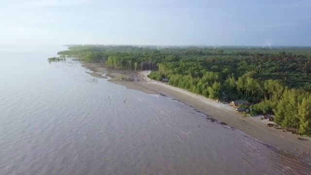 aerial view of mangrove forest - malaysia stock videos & royalty-free footage