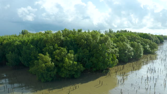 aerial view of mangrove forest with blue sky - mangrove forest stock videos & royalty-free footage