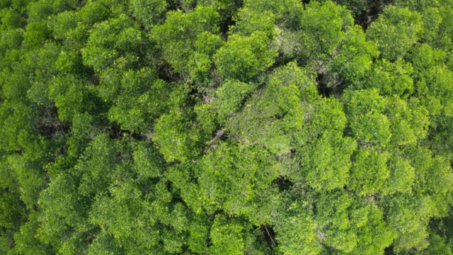 aerial view of mangrove forests in thailand - mangrove forest stock videos & royalty-free footage