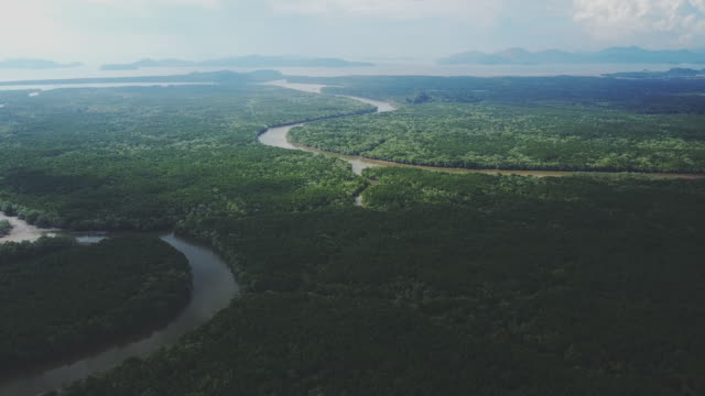 vídeos de stock, filmes e b-roll de vista aérea da floresta de mangue e o rio em ranong, tailândia - land