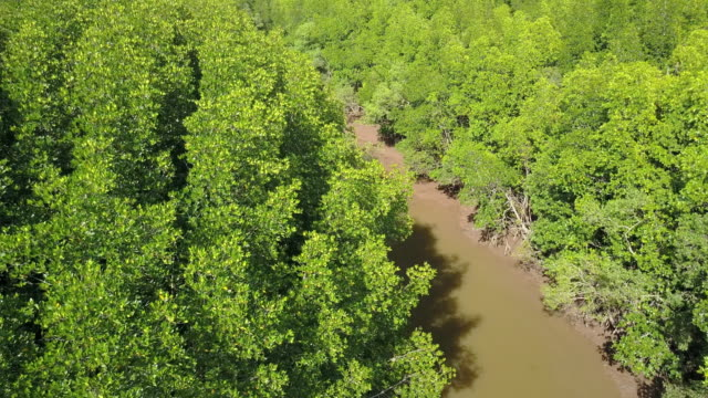 aerial view of mangrove tree forest and river at ranong, thailand - swamp stock videos & royalty-free footage