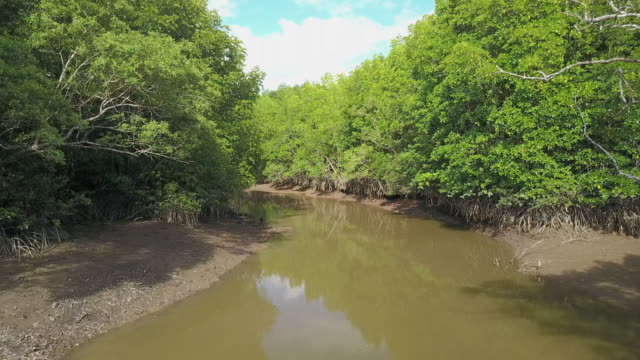 aerial view of mangrove tree forest and river at ranong, thailand - mangrove tree stock videos & royalty-free footage