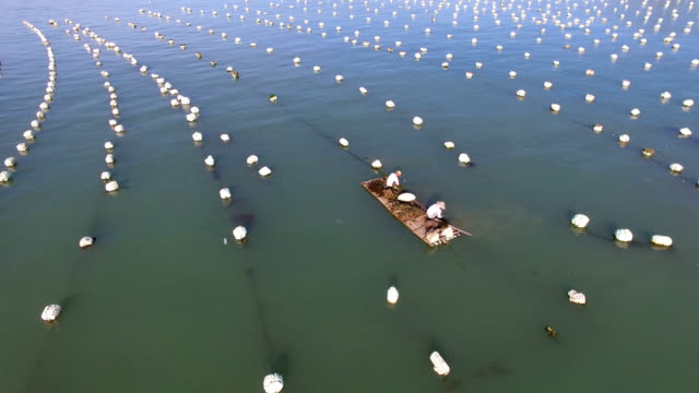Aerial view of mariculture in sea,Fujian,China.
