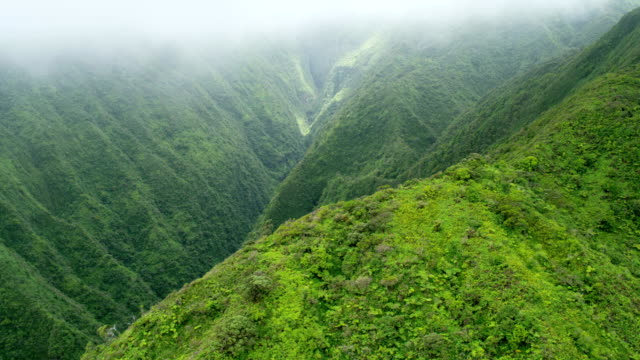 aerial view of maui valley in tropical rainforest - hawaii inselgruppe stock-videos und b-roll-filmmaterial