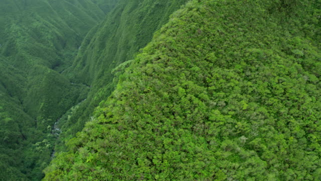 aerial view of maui valley tropical rainforest usa - hawaii inselgruppe stock-videos und b-roll-filmmaterial