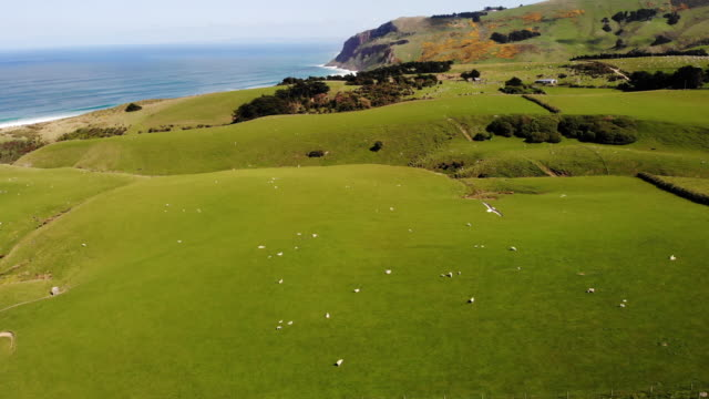aerial view of meadow and sheep farm, new zealand - sheep stock videos & royalty-free footage