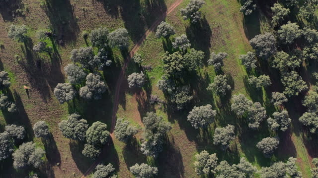 aerial view of meadow, mediterranean forest, sierra de san pedro, cáceres, extremadura, spain, europe - oak tree stock videos and b-roll footage