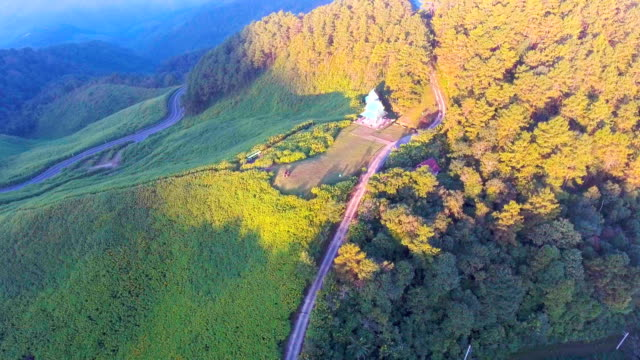aerial view of mexican sunflower with morning sunlight, mae hong son province, thailand - mae hong son province stock videos and b-roll footage
