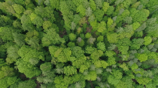 aerial view of mixed forest with deciduous and coniferous trees in early spring. steigerwald, franconia, bavaria, germany. - conceptual symbol stock videos and b-roll footage