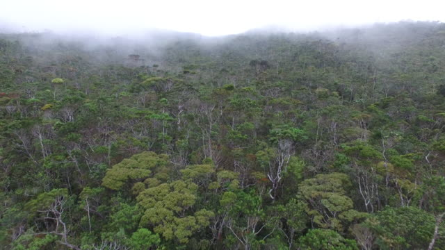 aerial view of mount hamiguitan's pygmy (bonsai) forest. - tree canopy stock videos and b-roll footage