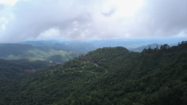 Aerial view of mountain and forest