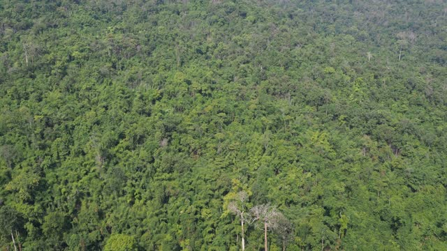 aerial view of mountains with tropical rainforest - named wilderness area stock videos & royalty-free footage