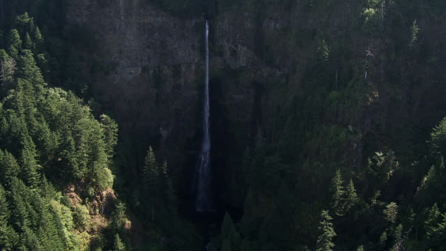 aerial view of multnomah falls surrounded by pine trees forest in washington, united states of america - multnomah falls stock videos & royalty-free footage