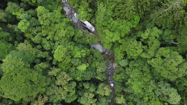 aerial view of natural bridge in springbrook national park australia - wilderness stock videos & royalty-free footage