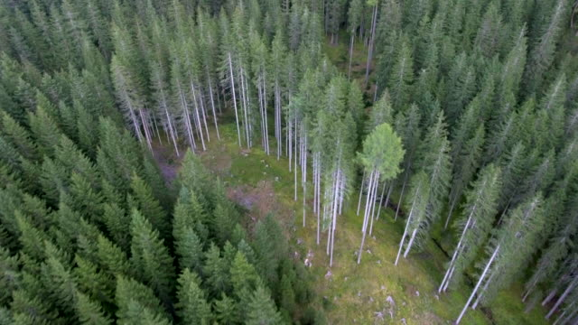 aerial view of nature forest in summer - wildlife stock videos & royalty-free footage