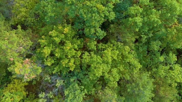 vídeos y material grabado en eventos de stock de vista aérea del bosque natural en verano - protección de fauna salvaje