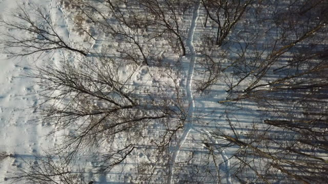 Aerial View of Nature Forest in Winter After Freezing Rain