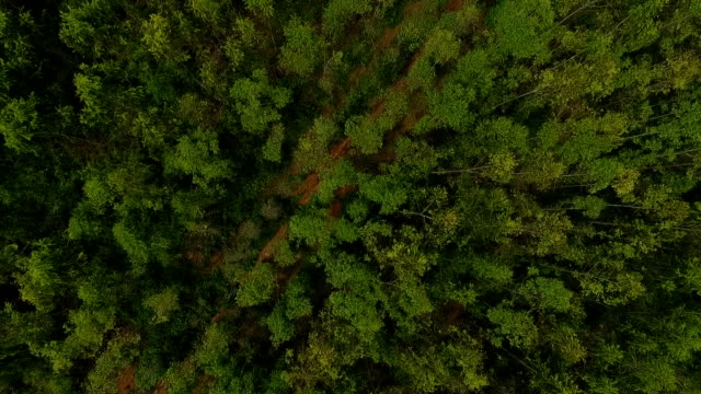 aerial view of nature forest - air to air shot stock videos and b-roll footage