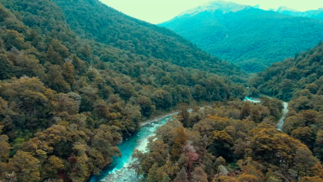 aerial view of new zealand forest - rotorua stock videos and b-roll footage