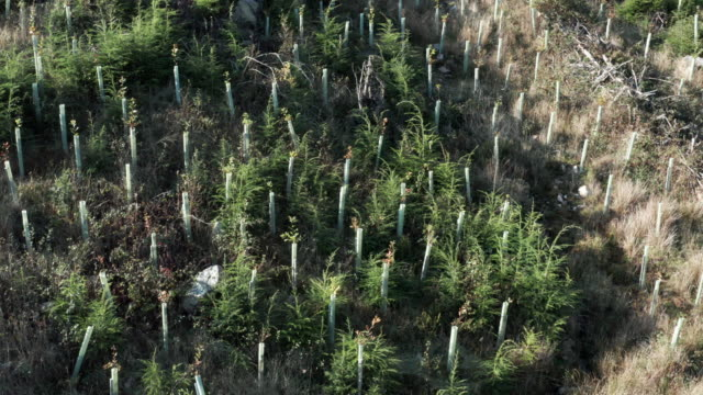 aerial view of newly planted trees on a hillside in dumfries and galloway - new stock videos & royalty-free footage