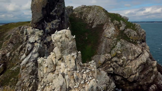 aerial view of northern gannet nesting colony - northern gannet stock videos & royalty-free footage