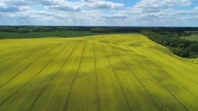 vídeos y material grabado en eventos de stock de aerial view of oilseed rape field in bloom, springtime. mecklenburg-vorpommern, germany, europe. - monocultivo