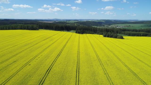 aerial view of oilseed rape field in bloom, springtime. saale-orla-kreis, schleiz, thuringia, germany, europe. - monoculture stock videos & royalty-free footage